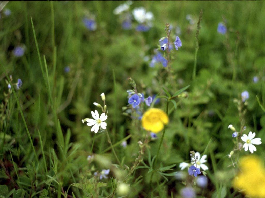 Природа россии цветы фото